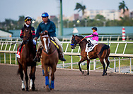 HALLANDALE BEACH, FL - JANUARY 27: West Coast with Javier Castellano up acts up pre race at the Pegasus World Cup Invitational at Gulfstream Park Race Track on January 27, 2018 in Hallandale Beach, Florida. (Photo by Alex Evers/Eclipse Sportswire/Getty Images)