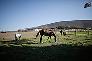 Equine assisted therapy at De Grendel farm Cape Town, through the Montrose clinic and foundation 27 December, 2011..The clinic treats patients with addiction illnesses such as alcoholism and eating disorders and the foundation is a charity that helps with street children from the townships...
