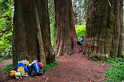 Syndey Kaufman rests in a fork in a tree during a backpacking trip in the Hoh Rainforest in Olympic National Park, Washington, June 1, 2015. (Photo by David Lienemann)