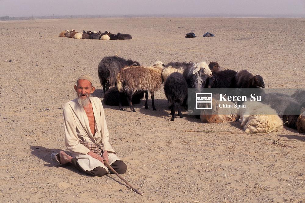 Uighur man herding sheep in Taklimakan Desert, Xinjiang Province, Silk Road, China