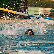 2015 ESSFTA National | Dock Diving