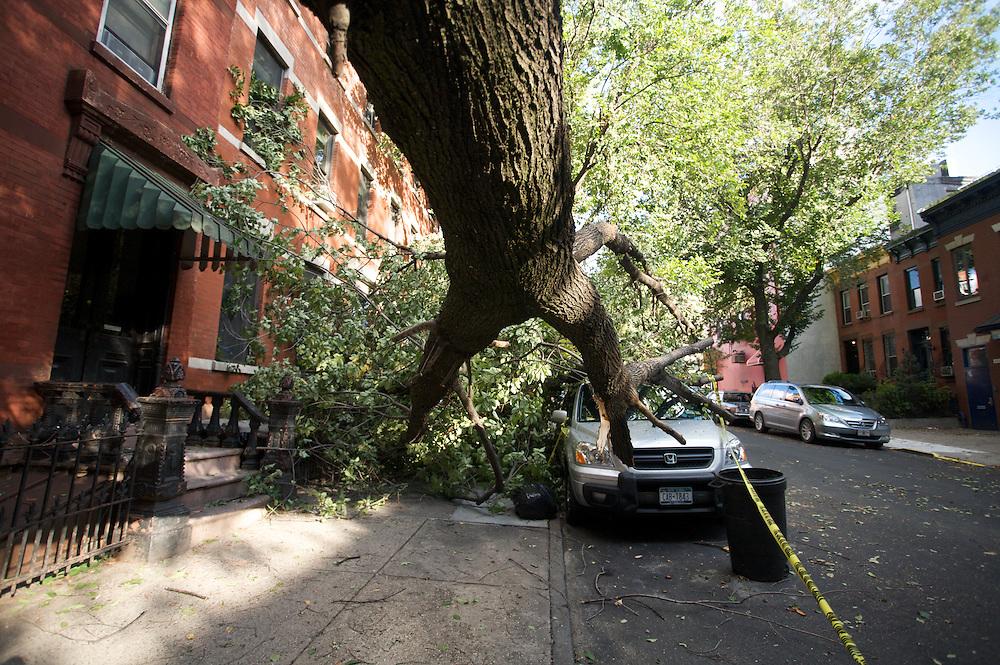 Park Slope tornado in Brooklyn, New York. 2010