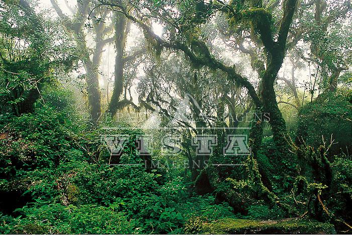 A paisagem magica da matinha nebular, um ecossistema cada vez mais raro na regiao serrana. Parque Nacional de São Joaquim, Urubici, Santa Catarina, Brasil  foto de Ze Paiva/Vista Imagens