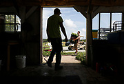 Jimmy Johnson, right, carries radishes into the shed at Millsap Farm during CSA harvest day on Tuesday, June 14, 2016. CSA members are required to work 12 hours on the farm.