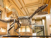 """Vente aux encheres exceptionnelle. <br /> Le 10 decembre, a Lyon, vous pourrez acheter un dinosaure. Il s'agit d'un Allosaurus, ancêtre du célèbre T-Rex. <br /> Il date d environ 150 millions d annees et a ete decouvert dans le Wyoming aux Etats-Unis par un groupe de paleontologues americains qui ont mis deux ans a l'exhumer et a le monter.Estimation : un million d'euros.Il est tres rare que des dinosaures soient ainsi vendus aux encheres.Avec ses 6 mètres de long et 2,50 m de haut, ce carnivore, chef de file des grands predateurs du Jurassique, vivait principalement en Amerique du Nord, il y a 153 a 136 millions d'annees.Il n'y a presque aucun veritable Allosaurus dans les musees français, en dehors de celui du Museum d'histoire naturelle de Paris, la plupart etant represente par des moulages «C'est tellement rarissime, s'extasie Claude Aguttes, commissaire-priseur. C'est l'objet le plus curieux et le plus insolite que j'ai eu a vendre"""" Prenomme Kan (ce qui signifie « chef » en langue mongole), l'Allosaurus expose a Lyon a l'hotel des ventes Aguttes est dans un etat de conservation remarquable, complet a 75 %  et possedant un crane parmi les mieux conserves du monde.Sa tete est complete à 98 %, avec ses dents d'origine, toutes accrochees à la machoire, ce qui est rarissime. Il n'y en a que 5 dans le monde. Une mine pour les scientifiques qui y voient l'occasion de faire progresser la connaissance.L'une des grandes conditions: que le squelette ait ses papiers en regle avec l'UNESCO,  l'achat de dinosaures etant un business tres lucratif."""