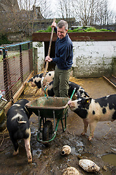 Pictured: Willie Rennie could not control the young boars in the Berkshire and Gloucestershire Old Spots pen as he mucked them out. <br /> Scottish Liberal Democrat leader Willie Rennie called for a boost to vocational training opportunities when he met volunteers, Leah Muirhead and Graham Mathieson, at Gorgie City Farm in Edinburgh. After touring the farm, which provides volunteering and training opportunities for at-risk young people and adults with additional support needs, Mr Rennie set out Lib Dem plans to increase opportunities for industry-recognised vocational qualifications.  <br /> Ger Harley | EEm 8 April 2016