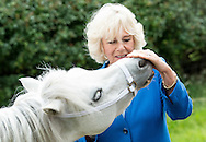 Camilla, Duchess of Cornwall views some Welsh Hill Ponies during a visit to Blaenau Mawr Farm Crickhowell, Wales.