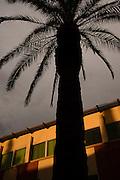 A palm tree grows on a college campus, Tucson, Arizona, USA.