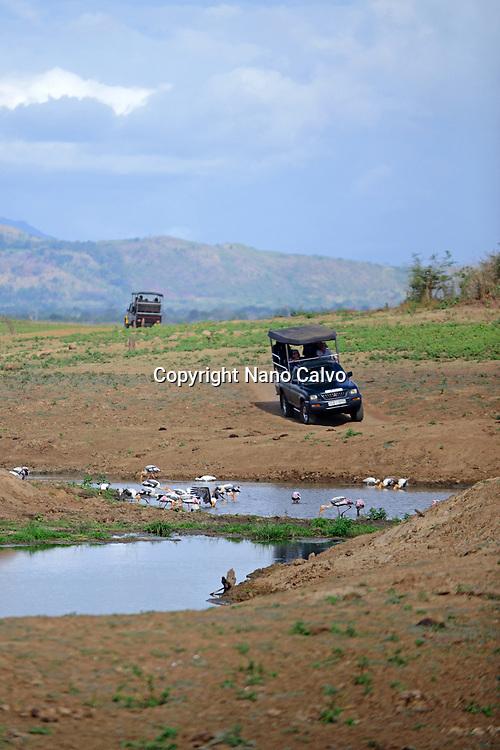 Safari jeep and painted storks (Mycteria leucocephala) in the water. Udawalawe National Park, on the boundary of Sabaragamuwa and Uva Provinces, in Sri Lanka.