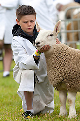 © Licensed to London News Pictures. 21/07/2015. Llanelwedd, UK. A young exhibitor in the Sheep Ring. The Royal Welsh Show is hailed as the largest & most prestigious event of it's kind in Europe. In excess of 200,000 visitors are expected this week over the four day show period - 2014 saw 237,694 visitors, 1,033 tradestands & a record 7,959 livestock exhibitors. The first ever show was at Aberystwyth in 1904 and attracted 442 livestock entries. Photo credit: Graham M. Lawrence/LNP