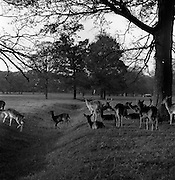 6/11/1967<br />