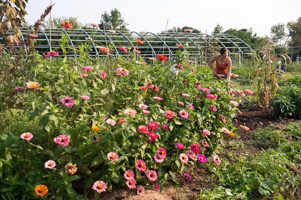 Graduate student Sarah Minkin tills and weeds at the West State Street Gardens. Photo by Ben Siegel