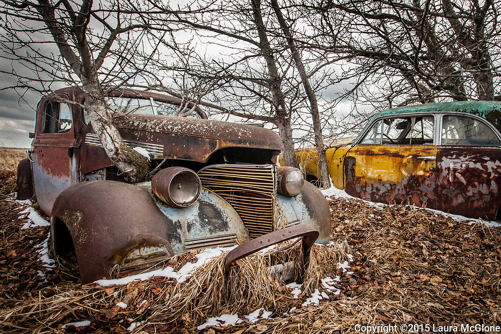 1940s Car with Tree Growing out of hood, Alberta Canada