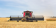 combine harvester harvesting golden barley <br />