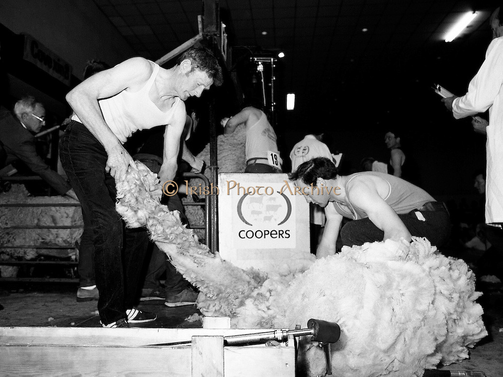 Contestants in the International Sheep Shearing and Fleece Rolling Championship keep up a steady rhythm as they roll and tie fleeces under the watchful eyes of the judges at the RDS in Dublin.<br /> 7 May 1987