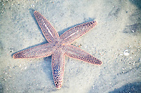A starfish in a pool of water on the beach