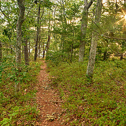 The Big Point Trail in the Wildlands Trust's Halfway Pond Conservation Area in Plymouth, Massachusetts.