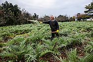Venezia - Isola di Sant'Erasmo. Gastone Vio, al lavoro nei campi.<br /> Venice - Sant'Erasmo Island. Gastone Vio, farmer, at work.