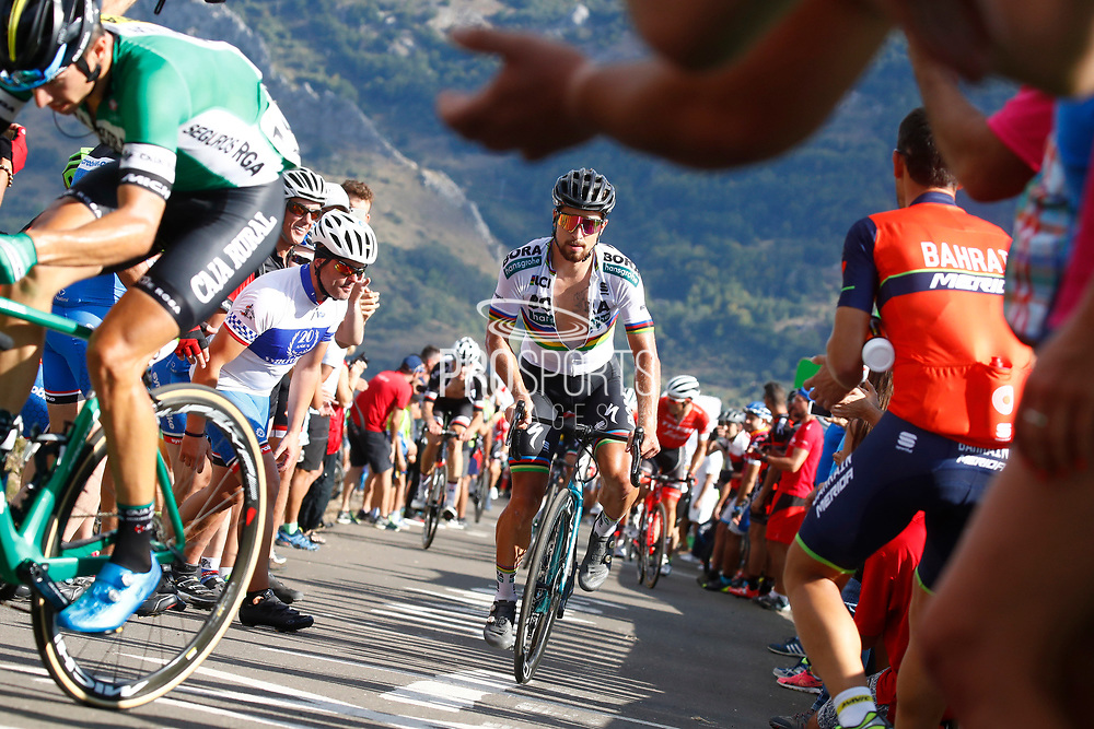 Peter Sagan (SVK, Bora Hansgrohe) during the 73th Edition of the 2018 Tour of Spain, Vuelta Espana 2018, Stage 13 cycling race, Candas Carreno - La Camperona 174,8 km on September 7, 2018 in Spain - Photo Luca Bettini / BettiniPhoto / ProSportsImages / DPPI