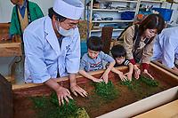 Japon, île de Honshu, région de Kansaï, Uji, fête pour la premiere cueillette de printemps du thé Sencha, cour collectif sur l'art du thé // Japan, Honshu island, Kansai region, Uji, festival for the spring first flush of Sencha tea, art of tea lesson