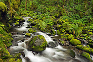 Ruckel Creek Spring - Columbia River Gorge National Scenic Area