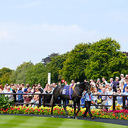 Newmarket 26th August