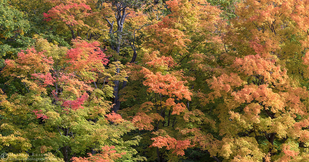 Fall foliage color at Lac Bourgeois in Gatineau Park, Gatineau, Québec, Canada.  Photographed from the Champlain Parkway in during Fall Rhapsody at Gatineau Park.