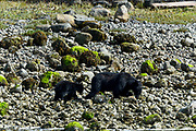 Wildlife photography from Archipeligo Wildlfe Cruise, British Columbia, Canada