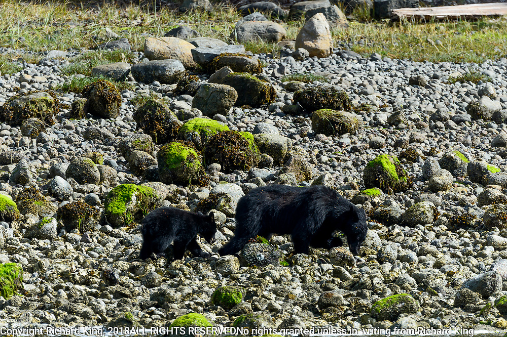 Wildlife photography from Archipeligo Wildlife Cruise, British Columbia, Canada