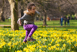 London, March 6th 2015. Londoners and tourists enjoy the warm sunshine in St James's Park as daffodils bloom, heralding the approach of spring. PICTURED: Seven-year-old Stella romps amongst the daffodils.