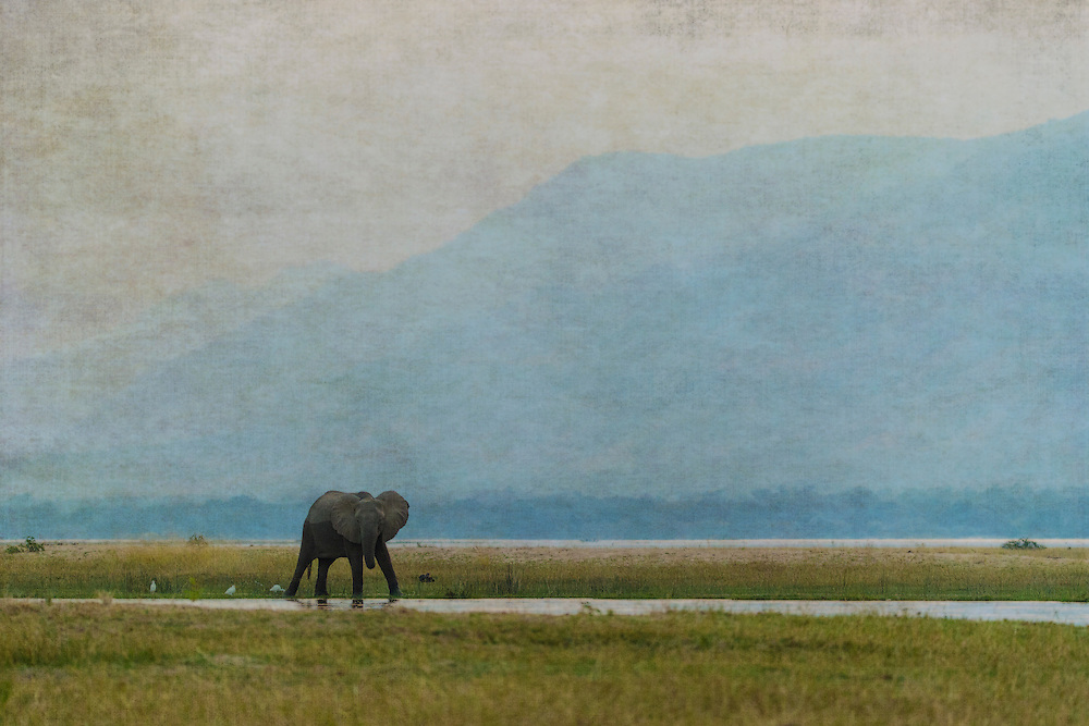 Lone elephant wades the Zambezi River
