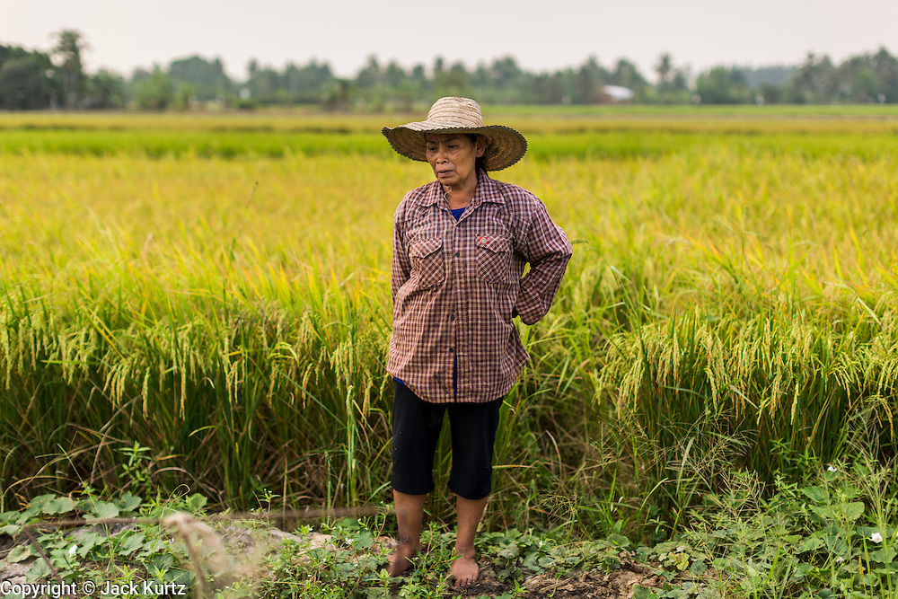 17 MARCH 2014 - LAM LUK KA, PATHUM THANI, THAILAND: A woman on the edge of her rice field in Pathum Thani province. She said the drought in central Thailand would cut her rice crop and family income by at least one third. It hasn't rained in central Thailand in more than three months, impacting agriculture and domestic water use. Many farms are running short of irrigration water and salt water from the Gulf of Siam has come up the Chao Phraya River and infiltrated the water plants in Pathum Thani province that serve Bangkok. PHOTO BY JACK KURTZ