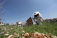 Regular checks are carried out on hives and trays to monitor damage and wear. Spares are kept on site and any damaged sections must be replaced immediately to ensure the best environment for the bees and subsequently the highest productivity levels.<br /> Nilli Abu-Rahma, Bil'in, Ramallah, West Bank, Palestine.