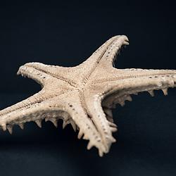 Artesanato de Angola. Estrela do mar, oceano Atlántico, Angola.