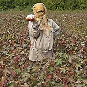 A cotton picker in a field near Dashoguz, Turkmenistan