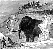 Woolly mammoth approximately 9ft high and 16ft long, discovered frozen in a block of ice in Siberia, 1779. Engraving c1870