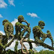 Bouganvilea tree trimmed into monkey's likeness, Taiwan Adventist Academy, Yuchih village,Yuchih Township, NanTou County, Taiwan