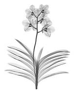 Orchids & Amaryllis