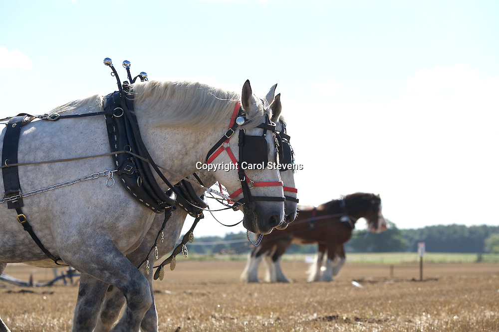 National Horse Ploughing Competition and Demonstrations 2016<br /> Steven Glavin