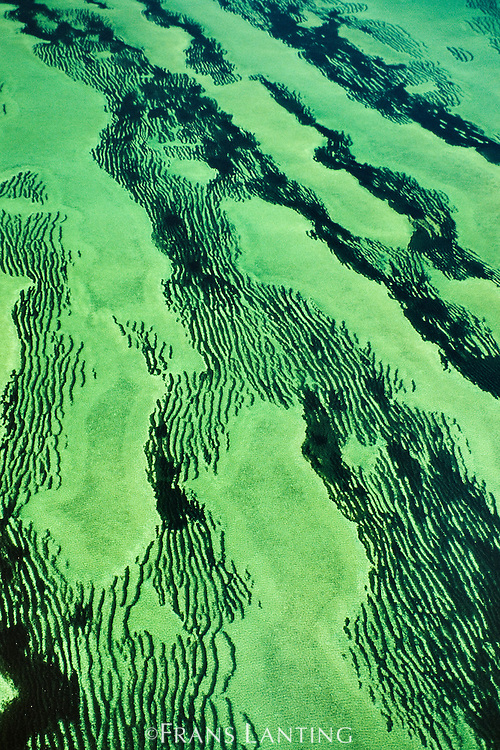 Seagrass meadows (aerial), Zostera sp., Shark Bay, Western Australia