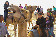 Israel, Negev Desert, Mamshit the Nabataean city of Memphis, re-enactment on the life in the Nabatean period. Tourists ride a camel convoy following the Incense Road