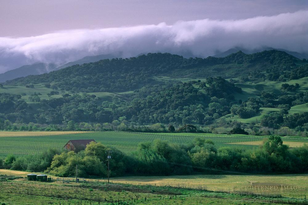 Morning fog over green hills and valley, near Solvang Santa Barbara County, California