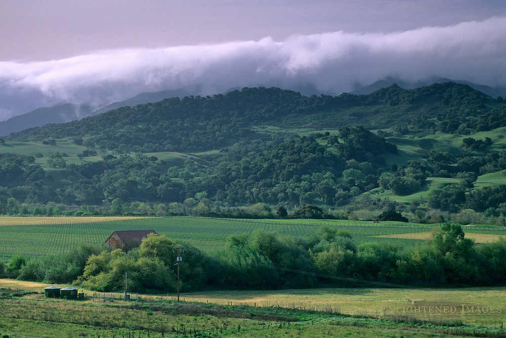 Morning fog over green hills and valley, near Solvang Santa Barbara County, California