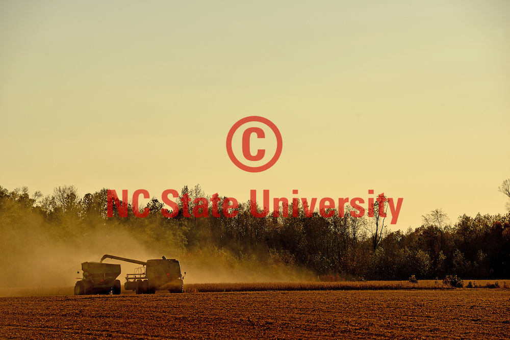 Dust kicks up from the fields as a farmer harvests soy beans in Wilson County near Saratoga.