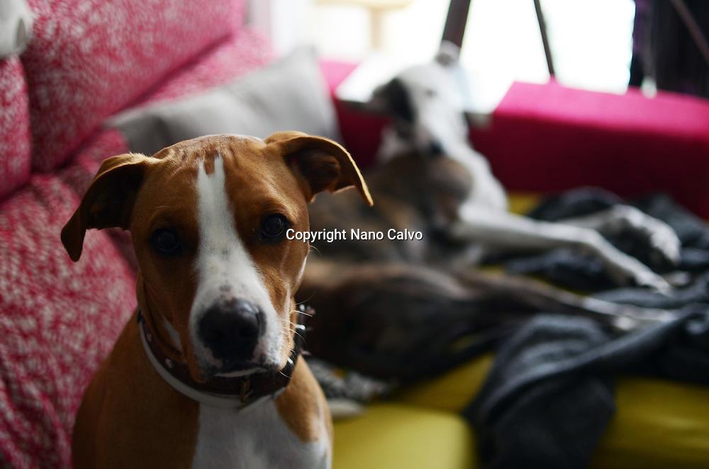Dogs on house sofa