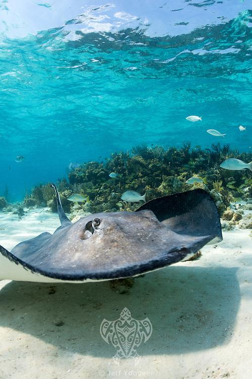Shot in Cayman Islands