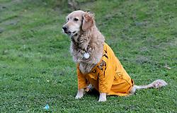 Olly Murs the retriever in a Hull City shirt