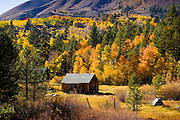 Old cabin and Fall aspens and color on Carson Pass, highway 88.