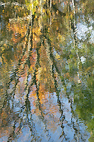 Abstract of autumn color reflections in a rural pond