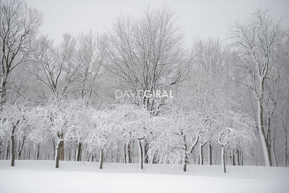 Snow covered trees and trails in Mont Royal Park in Winter, Parc du Mont Royal, Montreal, Quebec, Canada